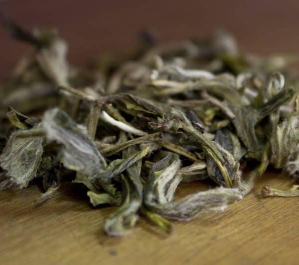 Snowbuds white tea leaves